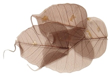 Scarva Brown Skeleton Leaves (8 Piece - 6-10cm)