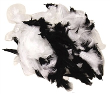 Scarva Black & White Feathers