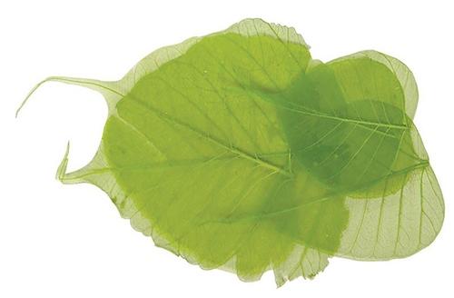 Scarva Light Green Skeleton Leaves (8 Piece - 6-10cm)